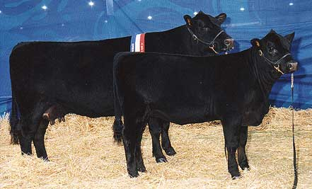 BMLR512 Talis Millicent Interbreed Pair Female Hordern Trophy