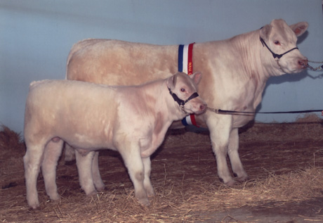 AISW26F Airlie Rebecca Interbreed Pair Female Champion